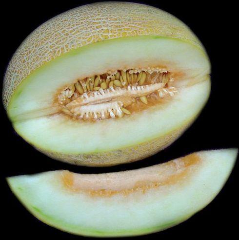 Ananas Melon Ananas Melone Samen