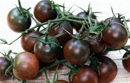 Black Cherry Tomato  semillas