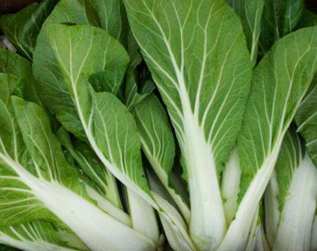 Brassica rapa Chinesischer Kohl Pak choi weiß Samen
