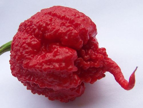 Chili Carolina Reaper  semillas