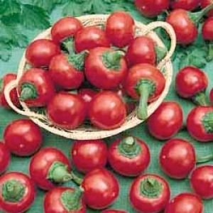 Chili Ciliegia Picante  semillas