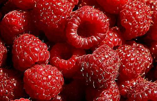 Raspberry Red  semillas