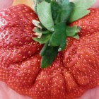 Strawberry Giant  semillas