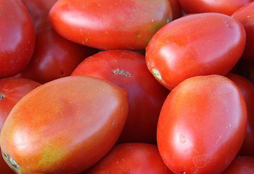 Tomate Amish Paste Pomodoro Amish Paste semi