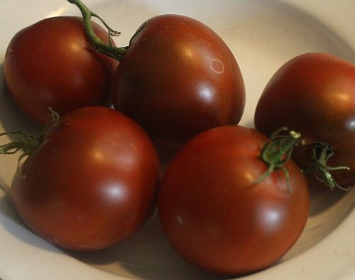 Tomate Black Prince Tomate schwarzer Prinz - Tomaten Samen Samen