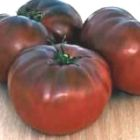 Tomate Brandywine Black Organic Heirloom tomate rouge fonc? graines
