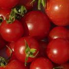 Tomate Miel de Mexique  semi