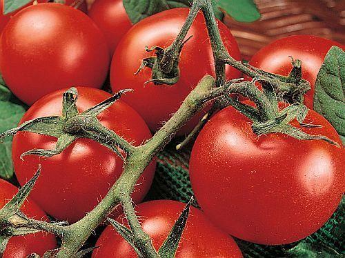 Tomate Money Maker Tomato Money Maker semillas