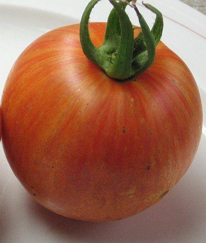 Tomate Mr Stripey Tomato Mr Stripey semillas