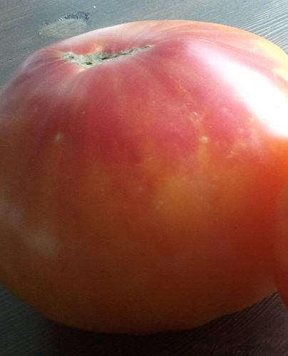 Tomate Old German Tomato Old German semillas