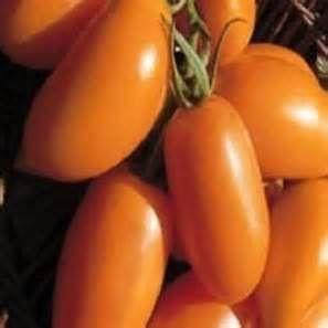 Tomate Orange Banana orangefarbene Flaschentomate Samen