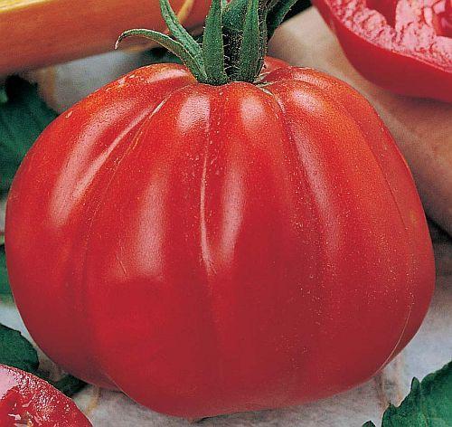 Tomate Pomodora Fleischtomate Samen