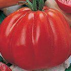 Tomate Pomodora tomate d h?ritage graines