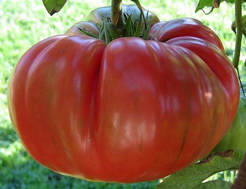tomate red brandywine beefsteak tomato seeds. Black Bedroom Furniture Sets. Home Design Ideas