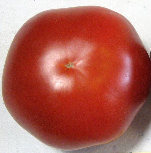 Tomate Saint Pierre Tomato Saint Pierre semillas