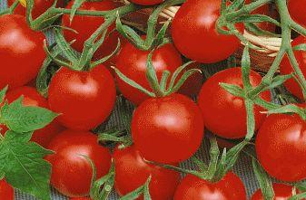 Tomato Cherry Sweetie  semillas