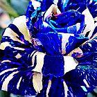 Adenium obesum Rare Blue  semillas