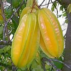 Averrhoa carambola fruit star graines