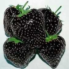 Black strawberry Black strawberry seeds