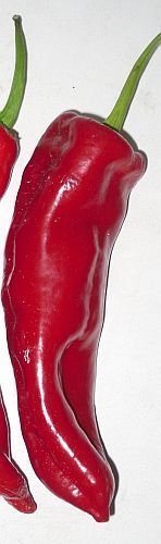 Chili Dulce Italiano hot pepper seeds
