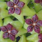 Hoya carnosa green-violet  semillas