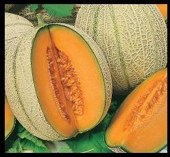 Melon Cantaloupe Retato Degli Ortolani Melon Cantaloupe Retato Degli Ortolani seeds