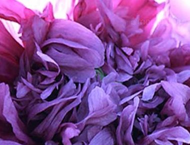 Papaver paeoniflorum Lilac Pompom Peony Poppy - Breadseed Poppy Lilac Pompom seeds