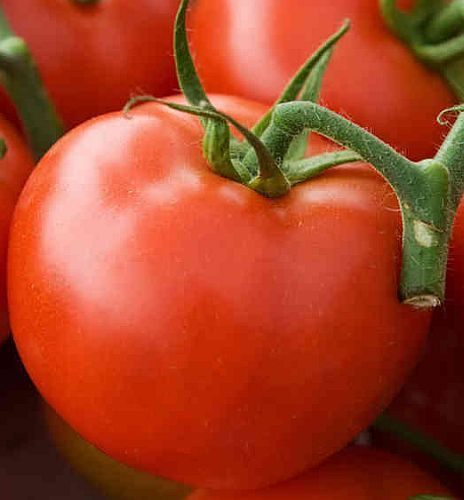 Tomate Arkansas Traveler tomato seeds