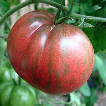 Tomate Berkley Tie Dye heart-shaped tomato seeds