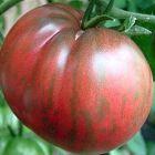 Tomate Berkley Tie Dye herzf?rmige Tomate Samen
