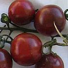 Tomate Black Cherry Pomodoro Black Cherry semi