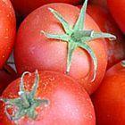 Tomate Bonny Best Tomate Beste Bonny - Tomaten Samen Samen