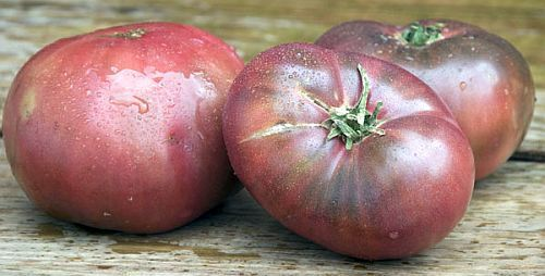 Tomate Cherokee Purple heirloom tomato seeds