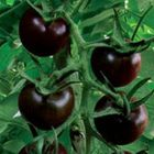 Tomate Chinese Black Pearl  semi