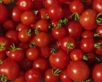Tomate Miel de Mexique mexican honey tomato seeds