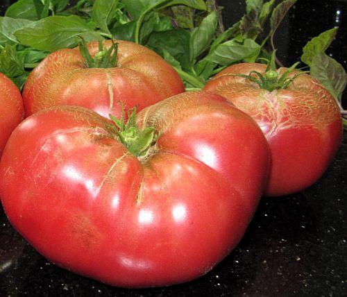 Tomate Pantano Romanesco tomato seeds