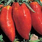 Tomate Piramide tomate graines