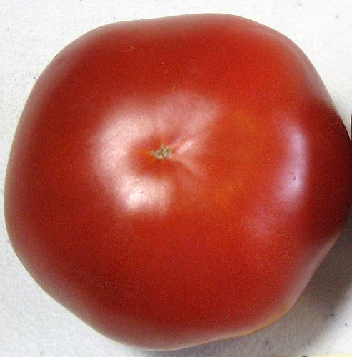 Tomate Saint Pierre red tomato seeds