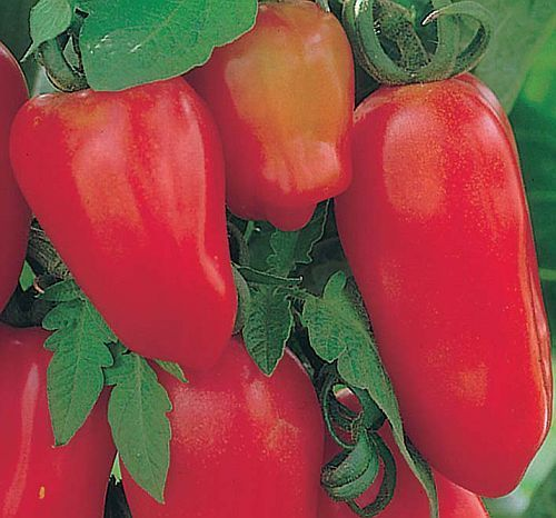Tomate San Marzano 3 red tomato seeds