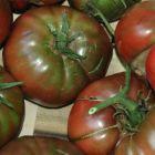 Tomato Black Truffle Tomate Black Truffle Samen