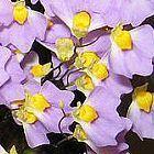 Utricularia bisquamata Wasserschlauch Samen