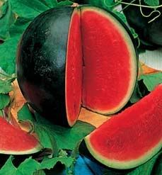 Water Melon Sugar Babe Super sweet water melon seeds