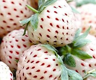 White strawberry White strawberry - Pineapple Strawberry seeds